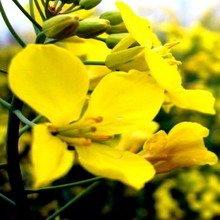 algunas imagenes de flores amarillas