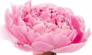 arreglo floral de flores baratas
