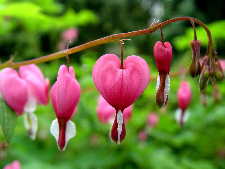 Flores Corazón de María