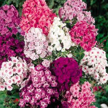 flor jacinto de papel