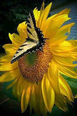 flor y mariposa
