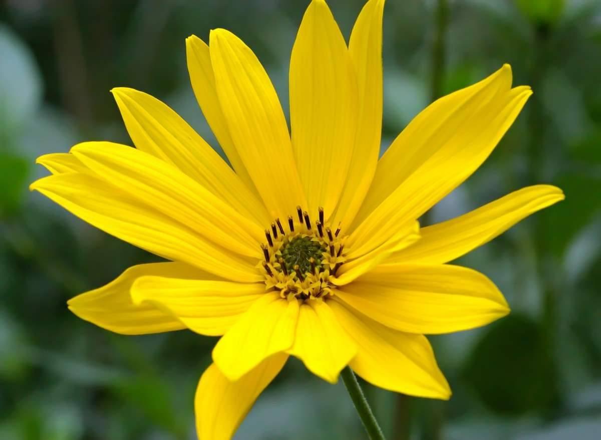 flores-amarillas-aguaturmas.jpg