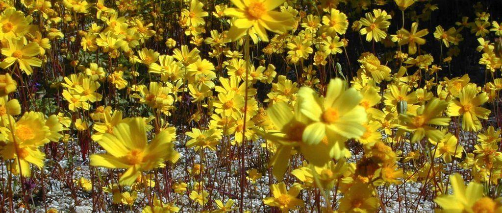 flores-amarillas-aladiernos.jpg