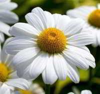 Flores baratas para arreglos florales bonitos y delicados for Donde venden plantas baratas