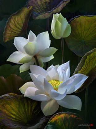 flores de loto significado