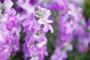 flores fragantes y radiantes jardin 3