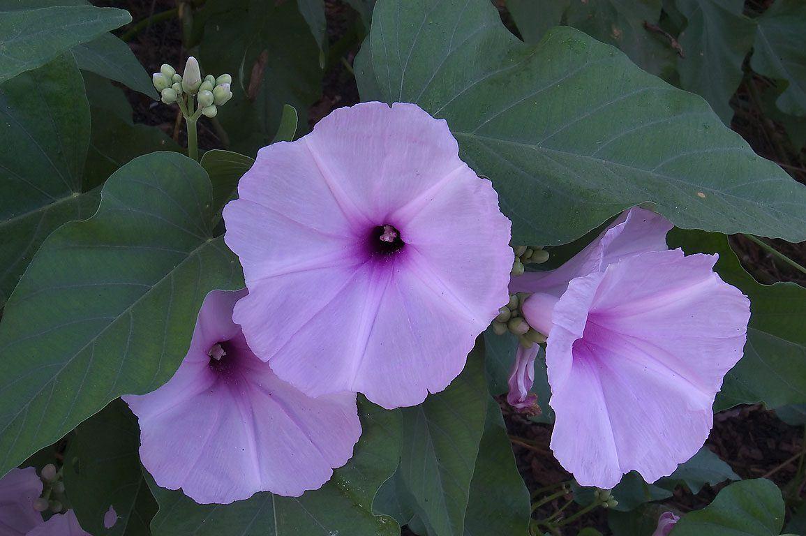 flores-moradas-matacabras.jpg