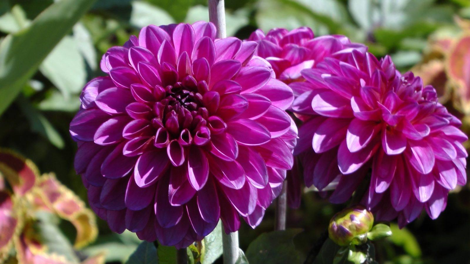 flores-moradas.jpg