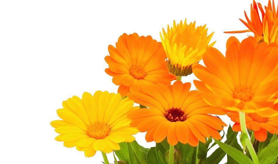 flores-naranjas.jpg