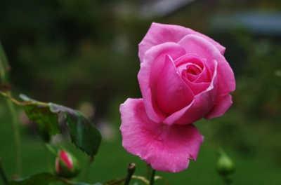 flores para cuidar tu piel 2