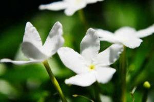 flores para cuidar tu piel 3