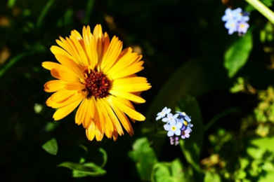 flores para cuidar tu piel 4
