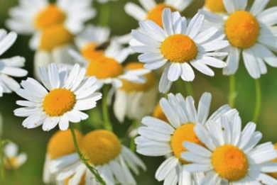 flores para cuidar tu piel 5