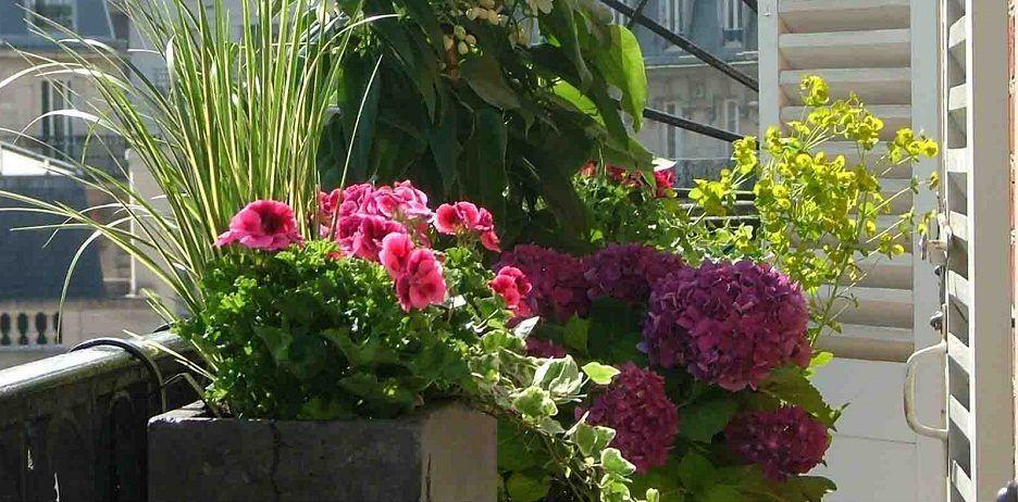 Consejos para cultivar flores en terrazas