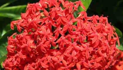 flores que encontraras en cuba 3