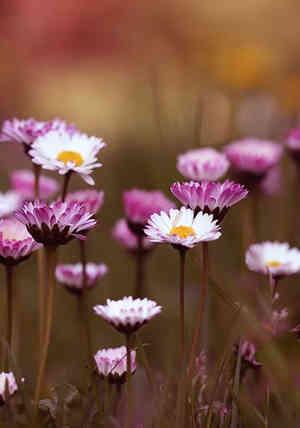 flores silvestres bonitas