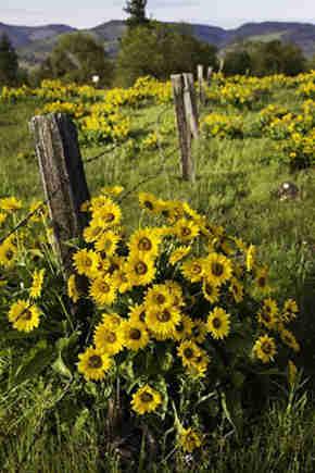 flores silvestres campo