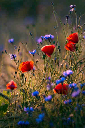 flores silvestres hermosas
