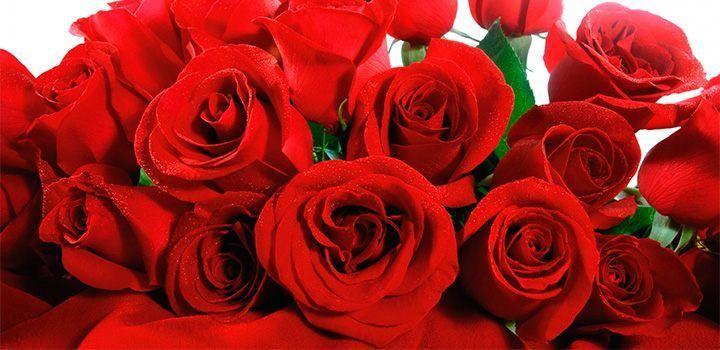 Fondo De Pantalla Flores Rosas: Fondos De Pantalla De Rosas