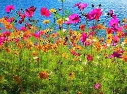foto paisajes de flores hermosas