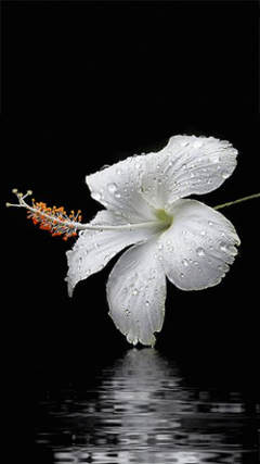 fotos de flores blancas