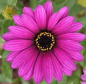 fotos de flores preciosas gratis