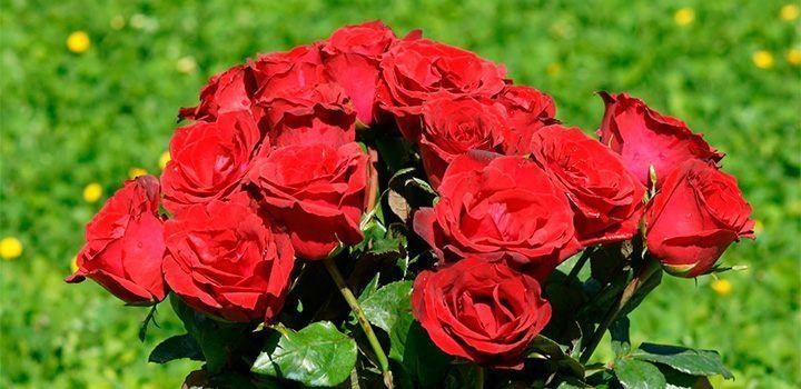 fotos-de-rosas.jpg