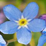 imagenes de flores azules bonitas