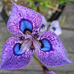 imagenes de flores bellas