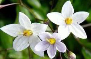 imagenes de flores relajantes