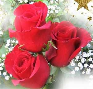 imágenes de rosas con frases de amor