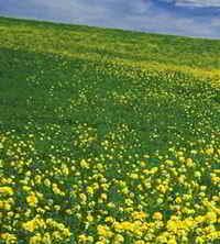 imagenes naturales de flores