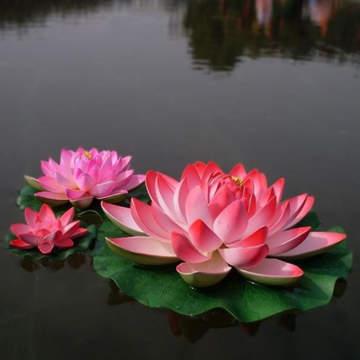 imagen de flor de loto