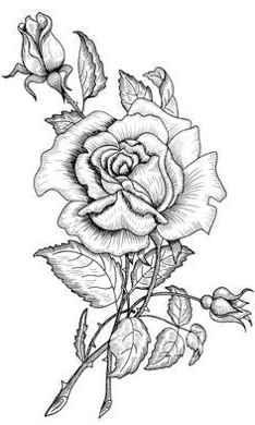 imagenes de flor para pintar