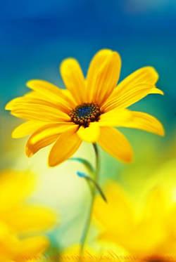 imagenes de flores amarilla