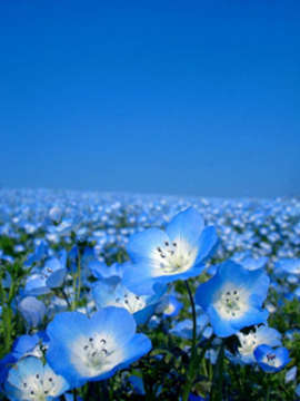 imagenes de flores azules