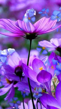imagenes de flores de loto hermosas