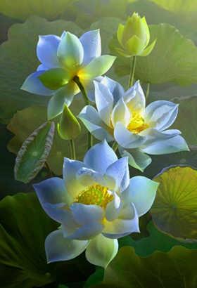 imagenes de flores de loto