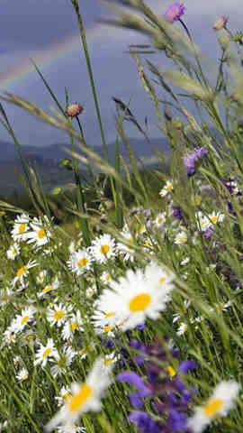imagenes de flores silvestres