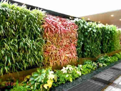 jardines verticales bellos 2