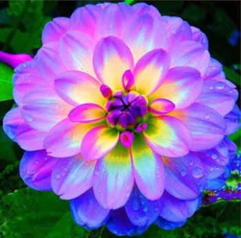 la flores mas bonitas del mundo
