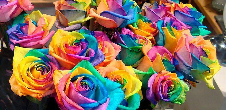 lenguaje-de-las-rosas.jpg