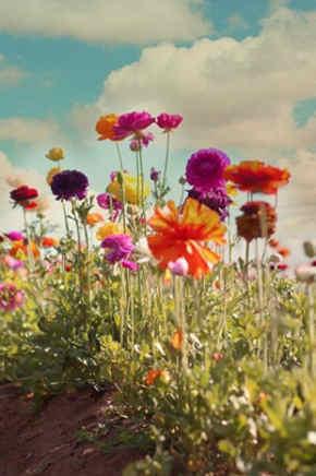 nombres de flores silvestres y mas