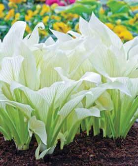 plantas con flores blancas