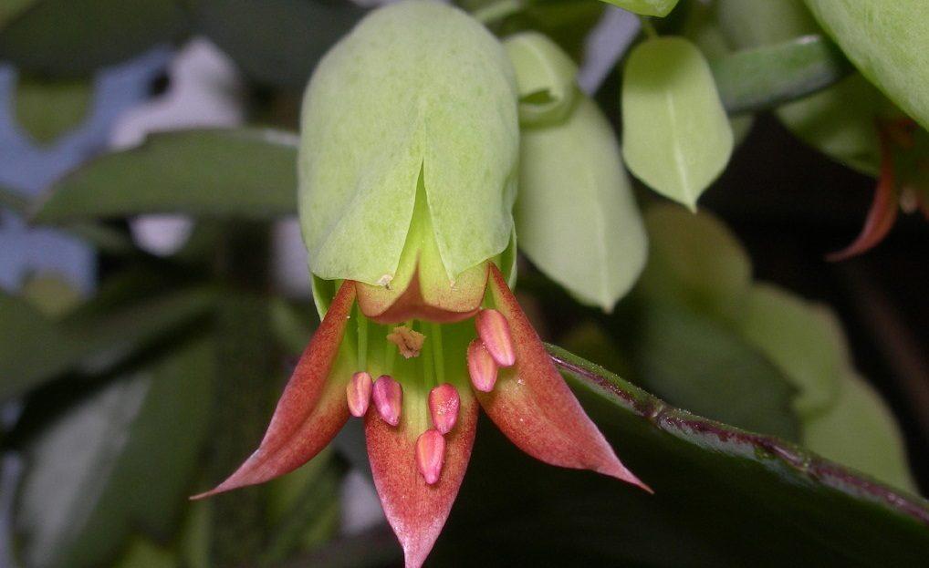 Plantas de interior grandes for Fotos de plantas de interior