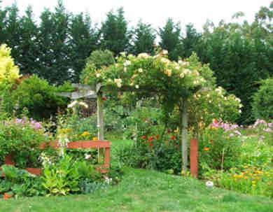 Plantas trepadoras para pergolas actinida kolomikta una - Plantas para pergolas ...