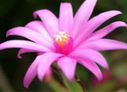 preciosa imagenes corola de flores