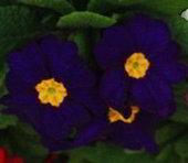 preciosas imagenes de flores