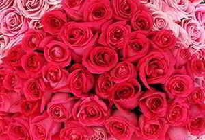 ramos rosas rojas dos tonos