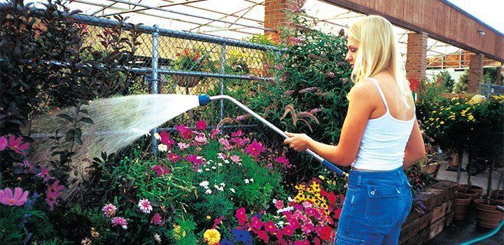 Riegos y alimentación de las flores